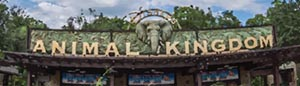 Disney World Animal Kingdom Crowds