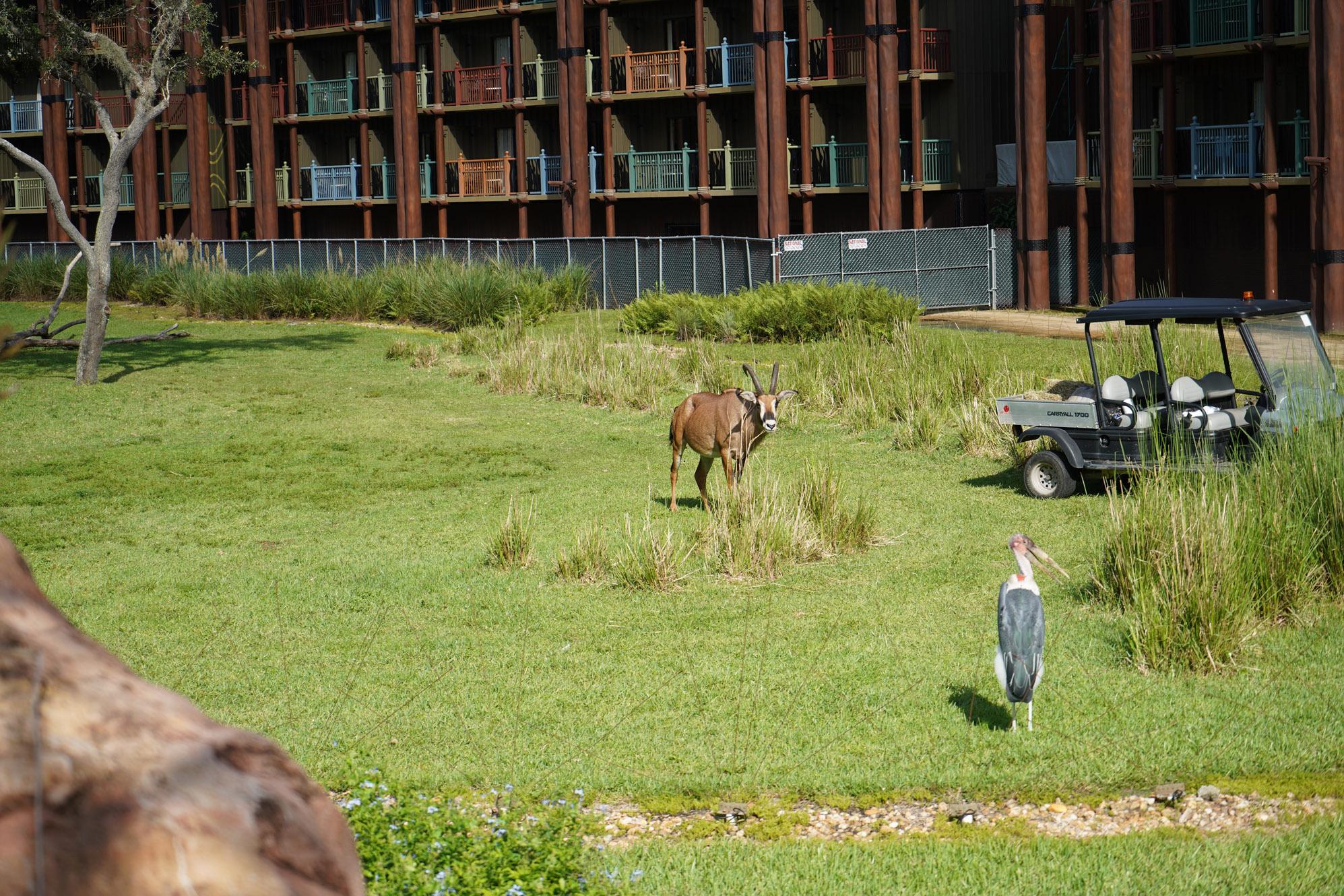Animal Kingdom Lodge Disney Deluxe Resort